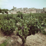 Vineyard and Village Along Rhone Near Avignon