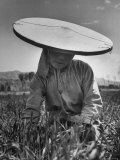Farm Woman Made Her Own Hat of White Muslin and a Bamboo Hoop