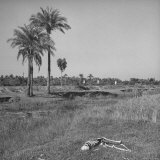 The Skeleton of a Starved Man Lying in a Field After Being Eaten by Vultures and Jackals