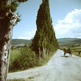 Farm Family in Mule Drawn Cart on Road Lined with Cypress Trees
