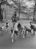 Dog Walker in Central Park