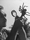 Man Examining a Large Spider  a Tarantula