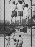 Child Fans of Baseball Watching on a Fence