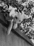Cat Owned by Olympic Track Star Harold Connolly and Family