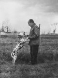 Adlai E Stevenson on His Farm with Pet Dalmatian Artie