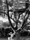 Children Playing in a Treehouse