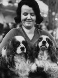 Champion Cavalier King Charles Spaniels  at Cruft's Dog Show