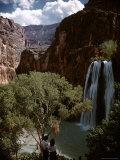 Two People Standing Beneath Tree  Watching Havasu Falls at Grand Canyon
