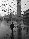 Pigeons Flocking Above Pedestrians Crossing Piazza San Marco on a Rainy Venice Day