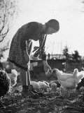 Small Flock of Chickens in Swiss Farmyard Being Fed by Girl of the Farm Family