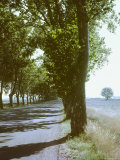 Tree Lined Road Near Nimes