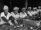 Women Packaging Bay Leaves in A&P Plant