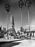 Temple of the Pip Surrounded by Three Sugar Palms