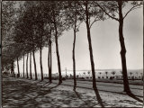 Tree Lined Street Along the Shore of Beautiful Shores of Lake Balaton