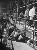 Sports Fans Attending Baseball Game at Ebbets Field