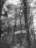 View of the Walls of the Chateau Through the Trees