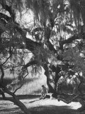 Pensive Portrait of Writer Josephine Pinckney Sitting Beneath Oak Tree Covered with Spanish Moss