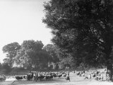People Enjoying a Beautiful Spring Day in Hyde Park
