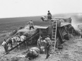 Workers Harvesting Barley Crop on Collective Farm