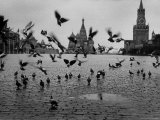 Pigeons in Red Square