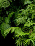 Close View of Lush Foliage in a Rain Forest