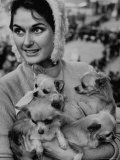 Woman Holding Four Long Haired Chihuahuas  During Cruft's Dog Show