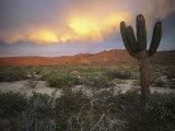 A Lone Cactus in a Desert Scene