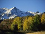 Autumnal View of Aspen Trees and the Rocky Mountains