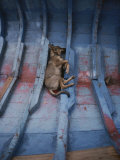 A Village Dog Naps in the Bottom of a Cat Boat