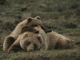 A Grizzly Mother and Her Cub Lounge Together in a Field