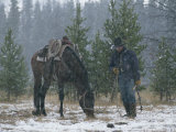Snow Falls on an Outfitter Grazing His Tacked Horse