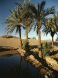 The Photographer Discovers an Oasis in the Middle of the Sahara Desert