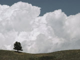 A Lone Ponderosa Pine Tree under a Cloud-Filled Sky