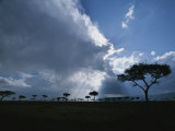 Sun Rays Break Through Clouds over Acacia Trees on an African Plain