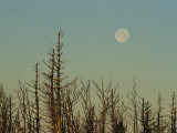 The Moon Rises Above Trees Along the Tennessee/North Carolina Border