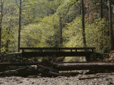 Footbridge over a Dry Stream in Yosemite