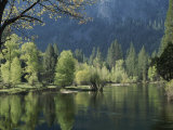 Spring View of the Merced River