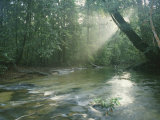 Sunlight Streams Through a Rainforest onto a Rushing Stream