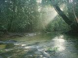 Sunlight Streams Through a Rainforest onto a Rushing Stream