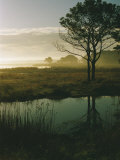Scenic View of the Misty Marsh Landscape