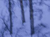 A Cold Wintry View of Leafless Trees in a Snowy Landscape