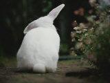Rear View of White Rabbit in Garden