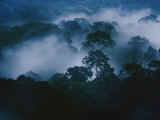 An Early Morning Mist Enshrouds the Danum Valley Rain Forest in Northeastern Borneo