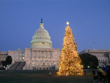 View of the National Christmas Tree Standing Before the Capitol