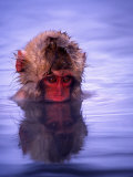 Baby Japanese Macaque (Snow Monkey) Bathing in Natural Hot Springs