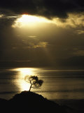 Sunset Silhouettes a Lone Tree on a Hill Overlooking the Ocean