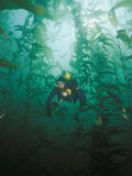 A Diver Exploring a Forest of Giant Kelp