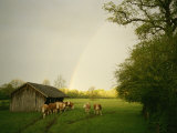 Cattle Gather Outside a Run-In Barn in a Lush Pasture