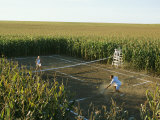 A Game of Tennis on a Court Carved from a Cornfield