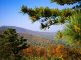 Pine Tree and Forested Ridges of the Blue Ridge Mountains